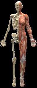 postura 126x300 - Il posturologo: conosciamolo meglio.